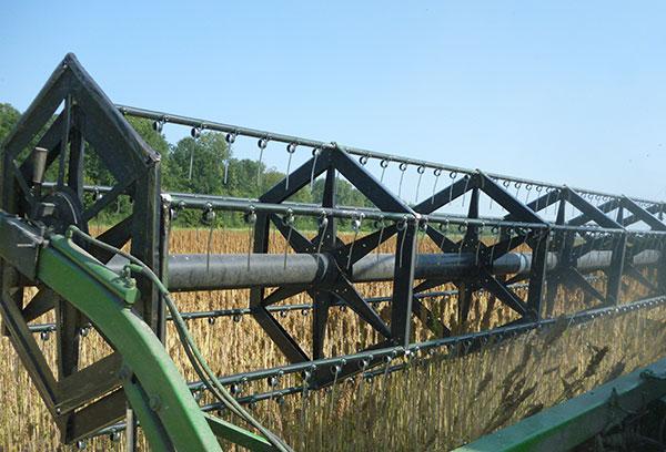 Met een combine haal je de quinoa planten naar voren en die worden onderaan afgeknipt zodat de pluimen (waar de quinoa zaadjes zitten) in de combine gaan.