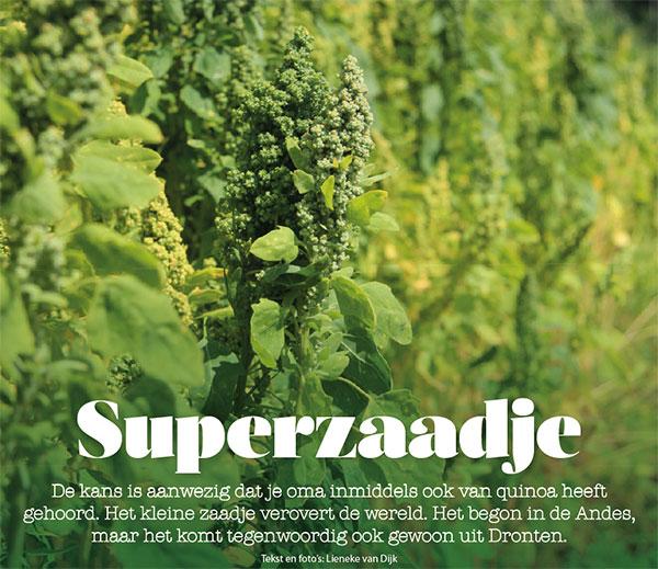 gezond eten quinoa holland