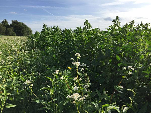 quinoa holland duurzaamheid